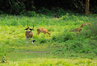 3 Nights 4 Days Chitwan Package Tour